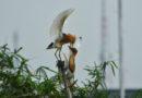 Kampung Blekok Surga Buat Para Fotografer Burung Yang Perlahan Tergeser Perumahan