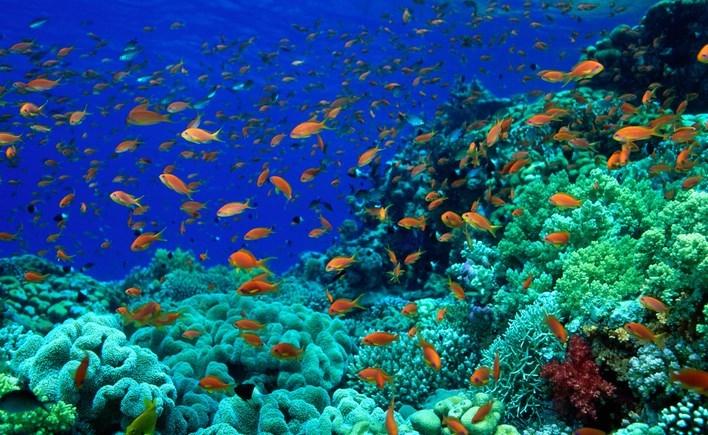 Gambar pemandangan di dasar laut yang indah
